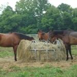 The three bay thoroughbreds